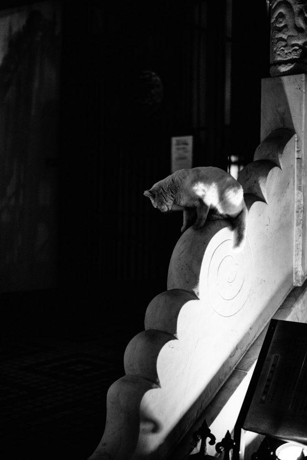 Katze auf dem Tempel in Tokyo S/W